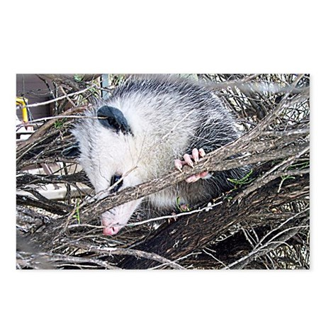 Peek-a-Boo Possum Postcards (Package of 8)