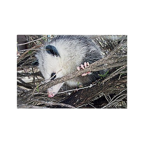 Peek-a-Boo Possum Rectangle Magnet