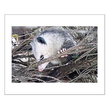 Peek-a-Boo Possum Small Poster