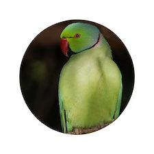 """Parrot 3.5"""" Button"""