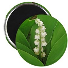3-lilyofthevalley Magnets