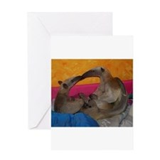 Anteater kiss Greeting Cards