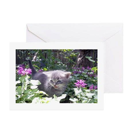 Flower Kitten Greeting Cards (Pk of 10)