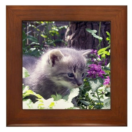 Gray Kitten Framed Tile