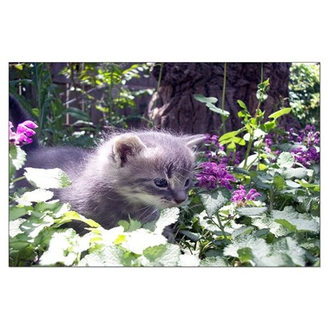 Gray Kitten Large Poster