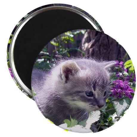 "Gray Kitten 2.25"" Magnet (100 pack)"