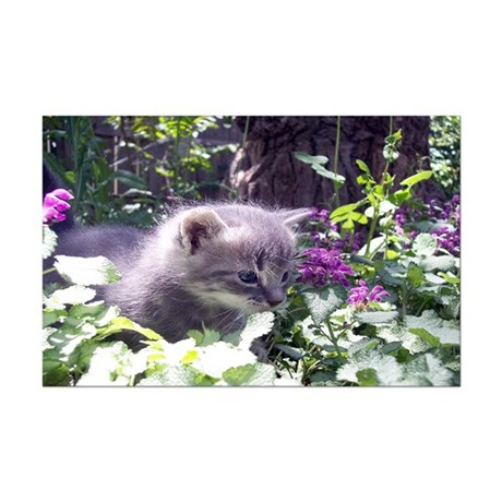 Gray Kitten Mini Poster Print