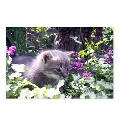 Gray Kitten Postcards (Package of 8)