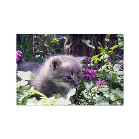 Gray Kitten Rectangle Magnet (100 pack)