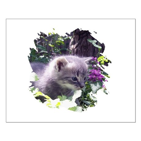 Gray Kitten Small Poster