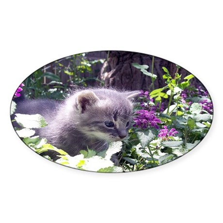 Gray Kitten Oval Sticker