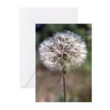 Dandelion Greeting Cards (6)