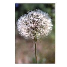 Dandelion Postcards (8)