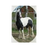 Unique Gray horse Rectangle Magnet (100 pack)