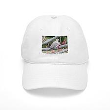 Mourning Dove Baseball Cap