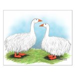 Sebastopol Goose Pair Small Poster