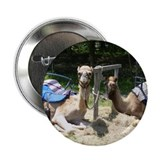 "Unique Camel 2.25"" Button (100 pack)"
