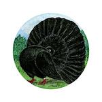 "Fantail Black Pigeon 3.5"" Button"
