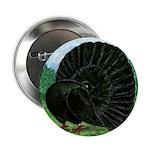 "Fantail Black Pigeon 2.25"" Button (10 Pack)"