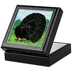 Fantail Black Pigeon Keepsake Box
