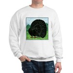 Fantail Black Pigeon Sweatshirt