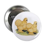 Buff Silkie Chickens Button