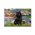 Lilies (2) & Schipperke Rectangle Magnet (10 pack)
