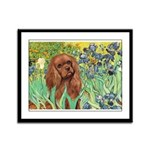 Irises & Ruby Cavalier Framed Panel Print