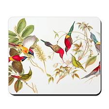 Gould Sunbird Birds Mousepad