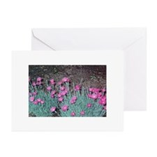 Greeting Cards (Pk of 10) Blank inside
