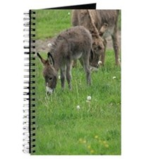 Miniature Donkey Foal Journal