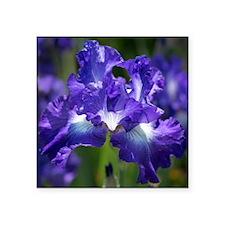 """iris garden Square Sticker 3"""" x 3"""""""