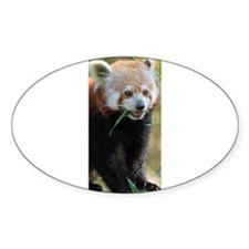 Red Panda 005 Decal