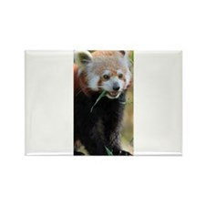 Red Panda 005 Magnets