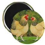 Wyandotte Rooster and Hen 2.25