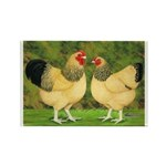 Wyandotte Rooster and Hen Rectangle Magnet (100 pa