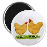 Buff Wyandotte Chickens Magnet
