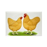 Buff Wyandotte Chickens Rectangle Magnet (100 pack