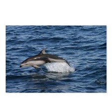 Pacific White Sided Dolphin Postcards (8)