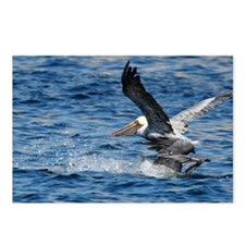 Brown Pelicans Marine Wildlife Postcards (8)