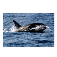 Killer Whale Marine Wildlife Nature Postcards (8)