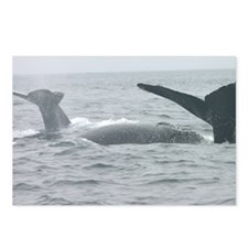 Humpback Whales Marine Wildlife Postcards