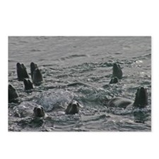 Sea Lions Marine Wildlife Postcards (8)