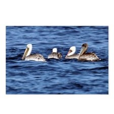 Brown Pelican Nature Wildlife Postcards (8)