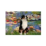 Lilies2-Tri Aussie Shep2 Rectangle Magnet