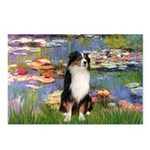 Lilies2-Tri Aussie Shep2 Postcards (Package of 8)
