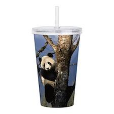 Cute Panda Acrylic Double-wall Tumbler