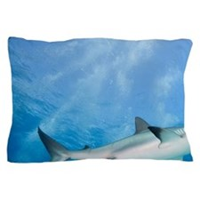 Caribbean Reef Sharks (Carcharhinus pe Pillow Case
