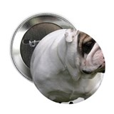 "Funny Minature english bulldog pictures 2.25"" Button (100 pack)"