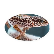 Leopard Gecko Oval Car Magnet